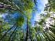 wsłuchaj się w odgłos lasu